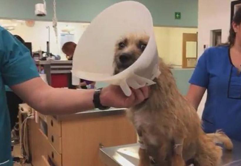 Video: El milagro de un rescate que dio vida a 10 perritos | El Imparcial de Oaxaca