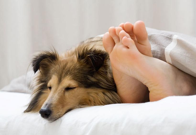Estas son las consecuencias de dormir con tu mascota | El Imparcial de Oaxaca