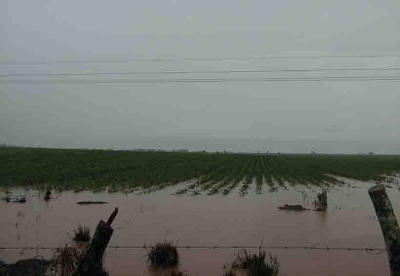 Oaxaca cuenta con 800 mil hectáreas de cultivo protegidas   El Imparcial de Oaxaca