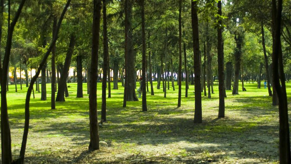 Hallan cadáver de bebé en el Bosque de Chapultepec en la CDMX | El Imparcial de Oaxaca