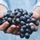 Consumo de uva pasa puede reducir niveles de glucosa y presión arterial
