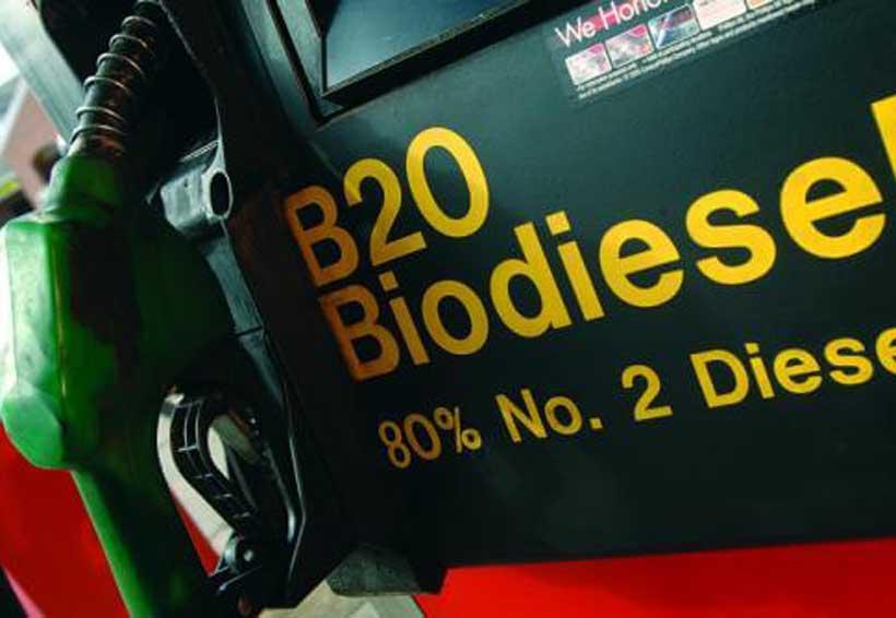 Desechos sólidos orgánicos, opción para generar biocombustibles: UAM | El Imparcial de Oaxaca