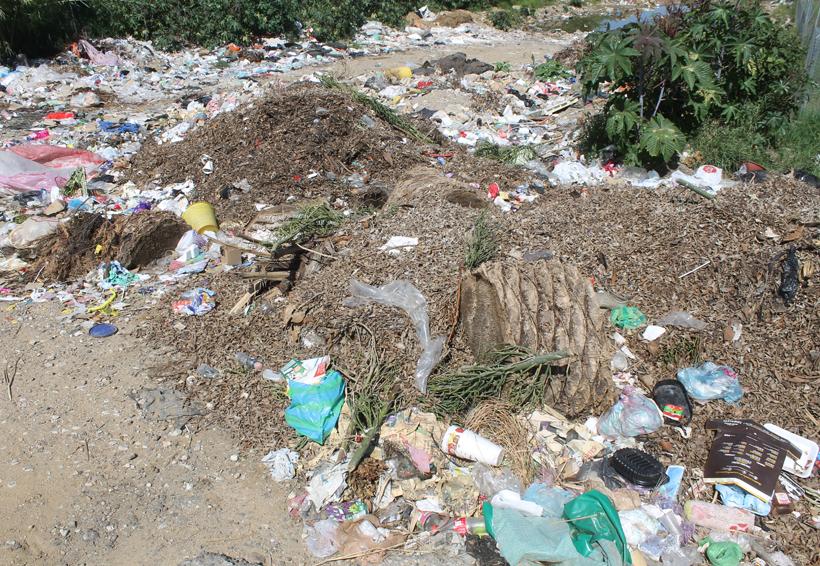 Urge una limpieza en terrenos y camellones de Oaxaca | El Imparcial de Oaxaca