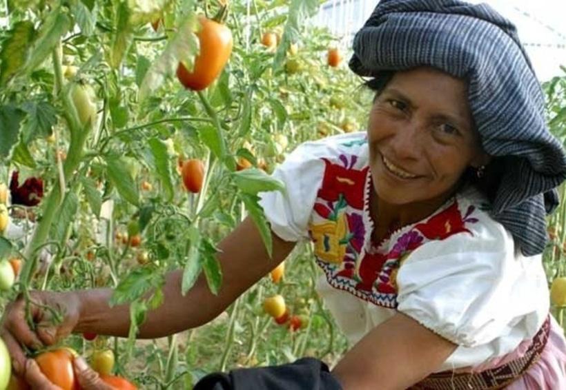 En Oaxaca, prioritario integrar a las mujeres en la producción | El Imparcial de Oaxaca