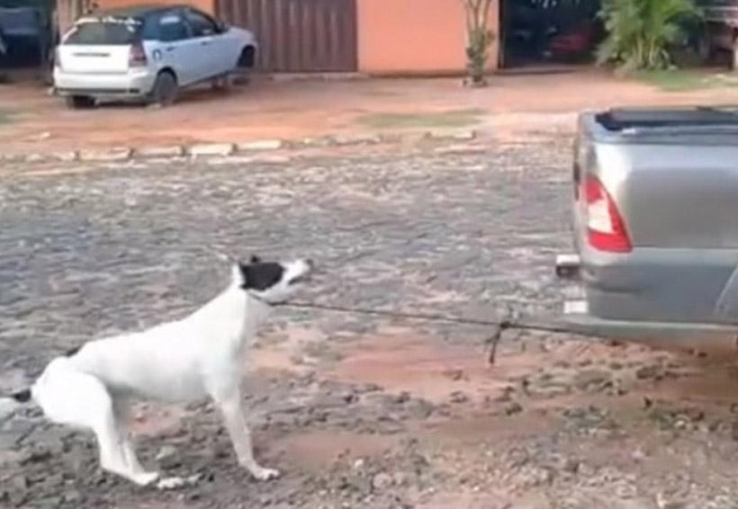 Mujeres amarran a perro a vehículo y lo arrastran hasta matarlo | El Imparcial de Oaxaca