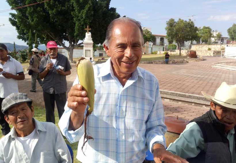 Presentan en la Mixteca de Oaxaca a 'Hojero', el maíz criollo