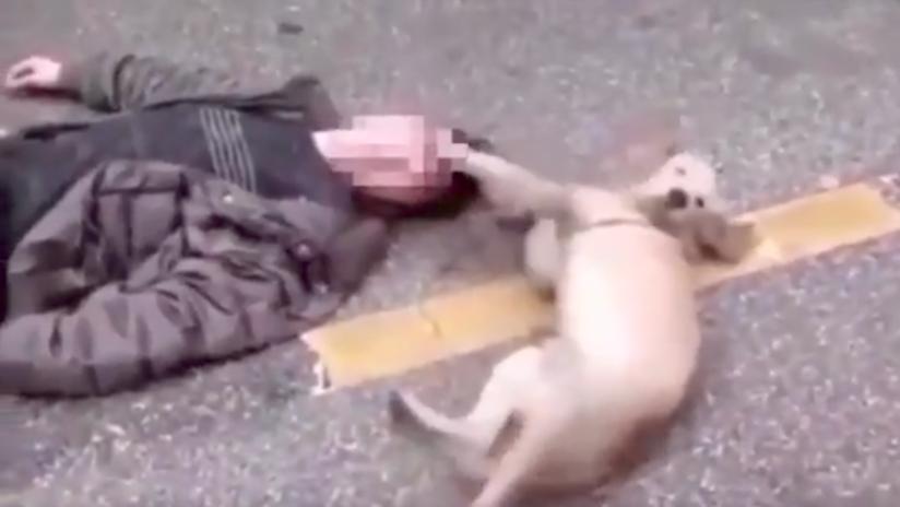 Conmovedor momento en el que un perro trata de despertar a su dueño desmayado en plena calle | El Imparcial de Oaxaca