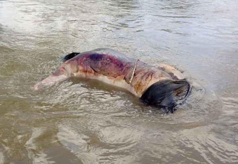 Localizan un cadáver flotando en el río | El Imparcial de Oaxaca