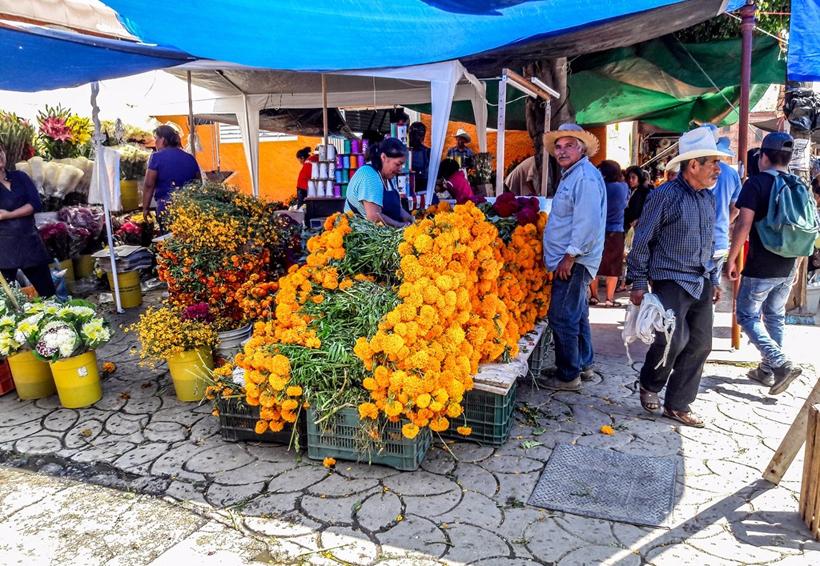 Produce la Mixteca cerca de 326  toneladas de flor de cempasúchil | El Imparcial de Oaxaca