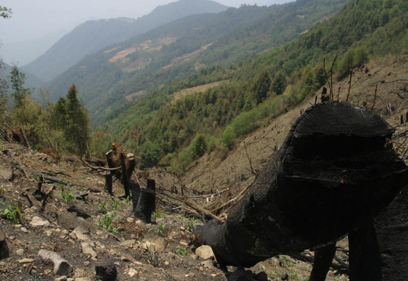 Cero resultados en la defensa del medio ambiente en Oaxaca | El Imparcial de Oaxaca