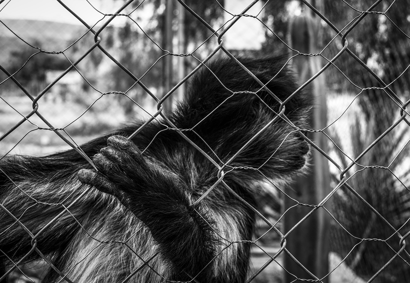 Ventana Fotográfica: 1×300   El Imparcial de Oaxaca