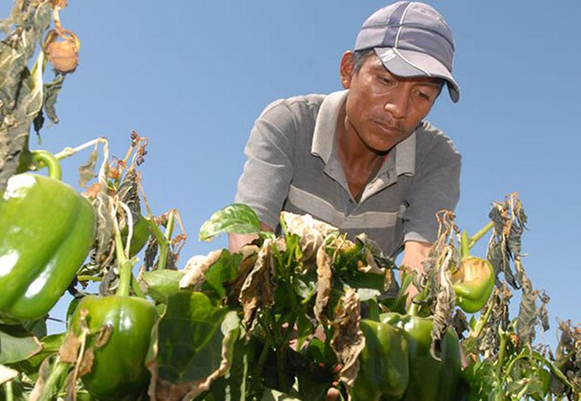 La mitad de oaxaqueños gana menos de dos salarios mínimos | El Imparcial de Oaxaca