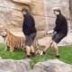 Video: Cuidadores son sorprendidos golpeando a los leones