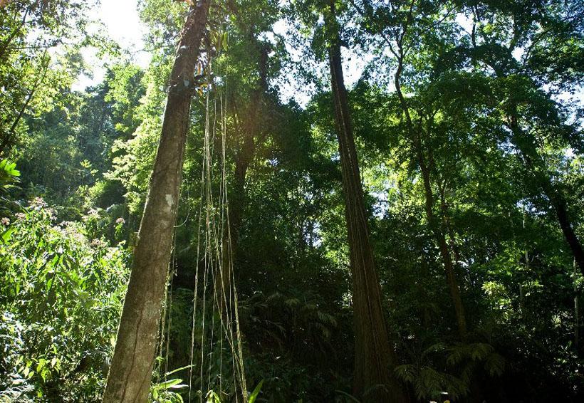 Biodiversidad y contradicción | El Imparcial de Oaxaca