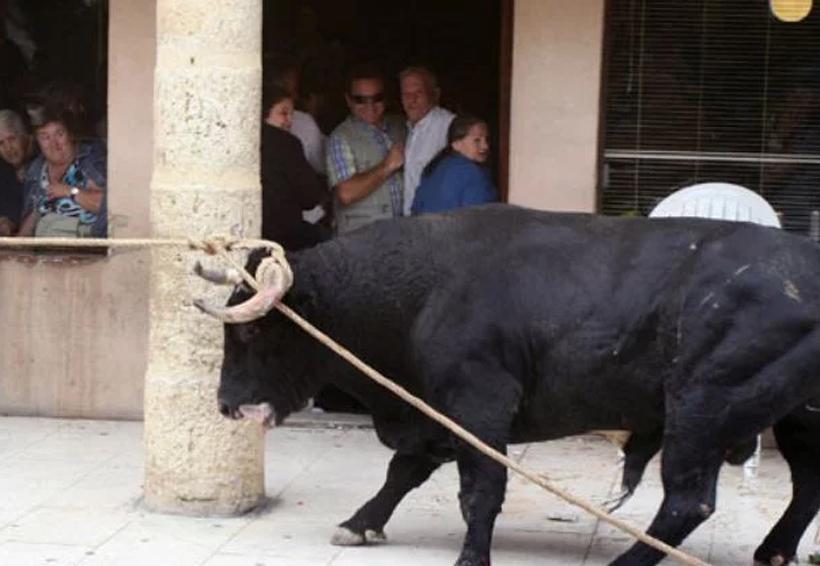 Paseaba por la calle cuando un toro le quitó la vida | El Imparcial de Oaxaca