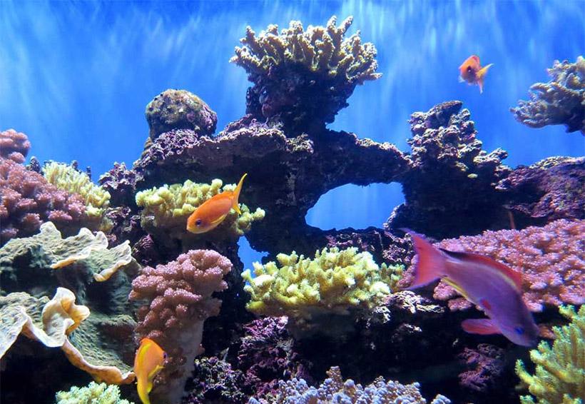 La mitad de los arrecifes de coral del mundo ha sido destruida | El Imparcial de Oaxaca