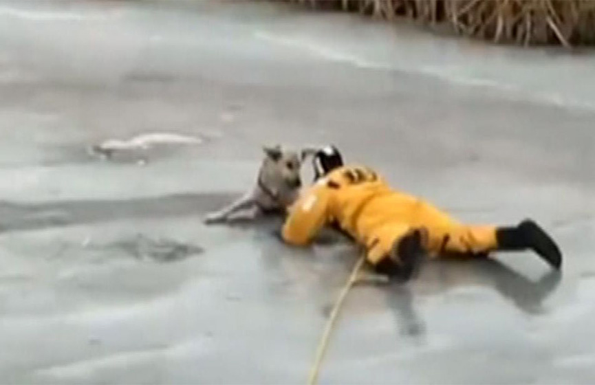 Video: Hombre arriesga su vida para salvar a un perro de río congelado | El Imparcial de Oaxaca