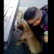 Video: Policía vial detiene tráfico para rescatar a dos perritos
