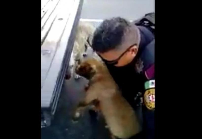 Video: Policía vial detiene tráfico para rescatar a dos perritos | El Imparcial de Oaxaca