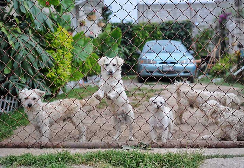 Seis de cada 10 mascotas que se regalan en Navidad van a la calle   El Imparcial de Oaxaca