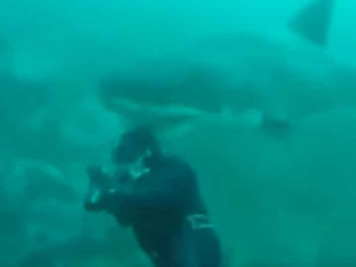 Video: Buzo casi sufre una mordida de un gran tiburón blanco   El Imparcial de Oaxaca
