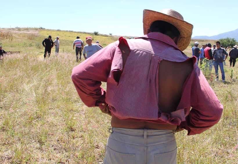 Extracción de madera detona conflicto agrario en Oaxaca | El Imparcial de Oaxaca