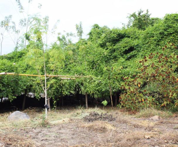 Actualizan padrón comunal de  Huatulco tras inconsistencias