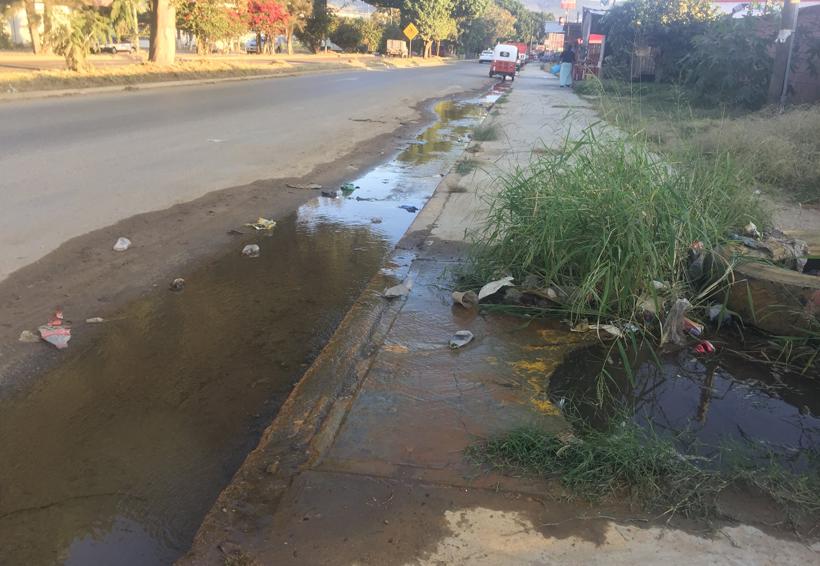 Reportan vecinos que SAPAO hace caso omiso a fuga de agua sobre Símbolos Patrios, Oaxaca | El Imparcial de Oaxaca