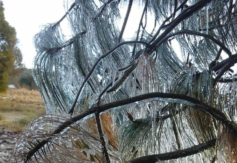 Mantiene CEPCO alerta por las bajas temperaturas en Oaxaca | El Imparcial de Oaxaca