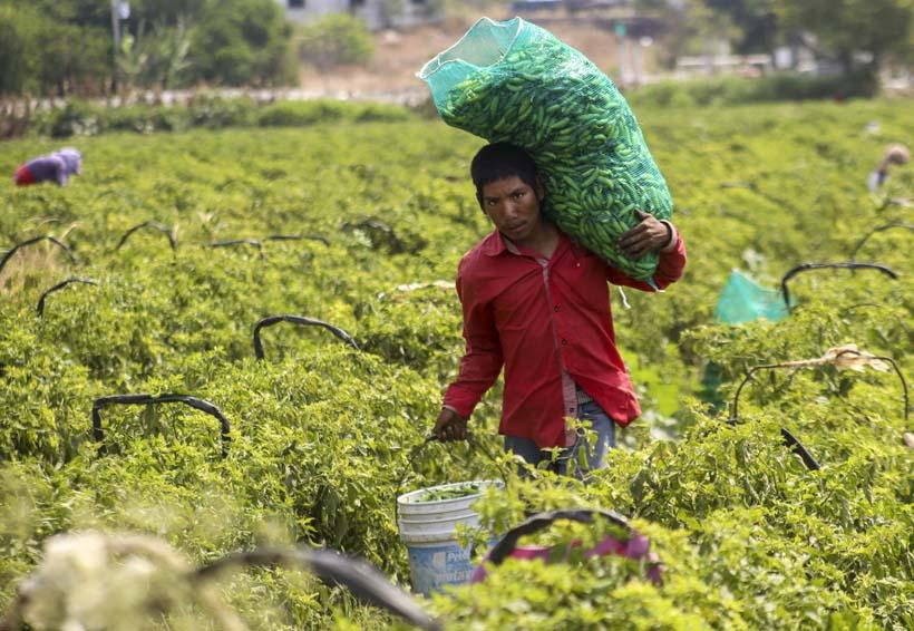 Diputados consideran insuficientes los apoyos al sector agropecuario en Oaxaca | El Imparcial de Oaxaca