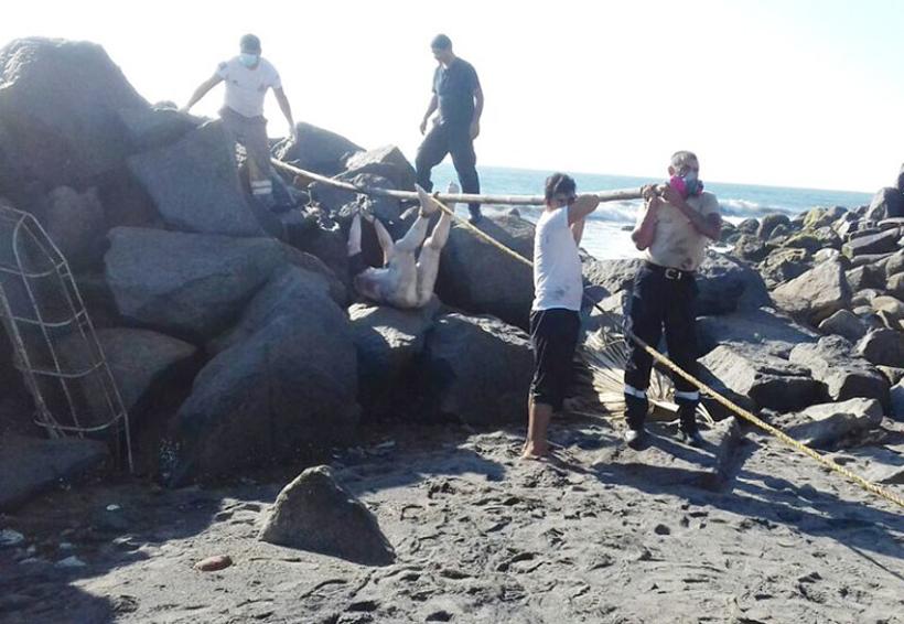 Localizan cuerpo de joven ahogado | El Imparcial de Oaxaca