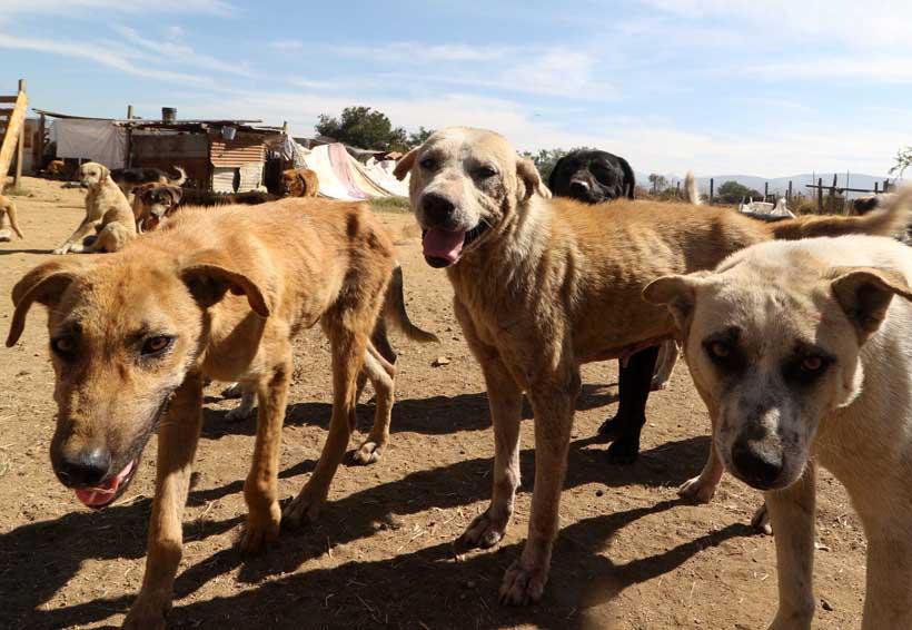 Mueren de hambre los perros de Tía Migue