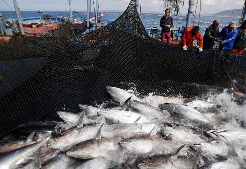 Producción de atún en Oaxaca cayó 44%; la de camarón, 21.8% | El Imparcial de Oaxaca