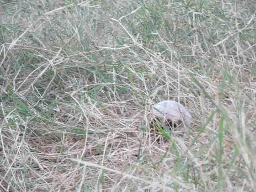 Hallan cráneo presuntamente de un niño en riberas del Atoyac | El Imparcial de Oaxaca