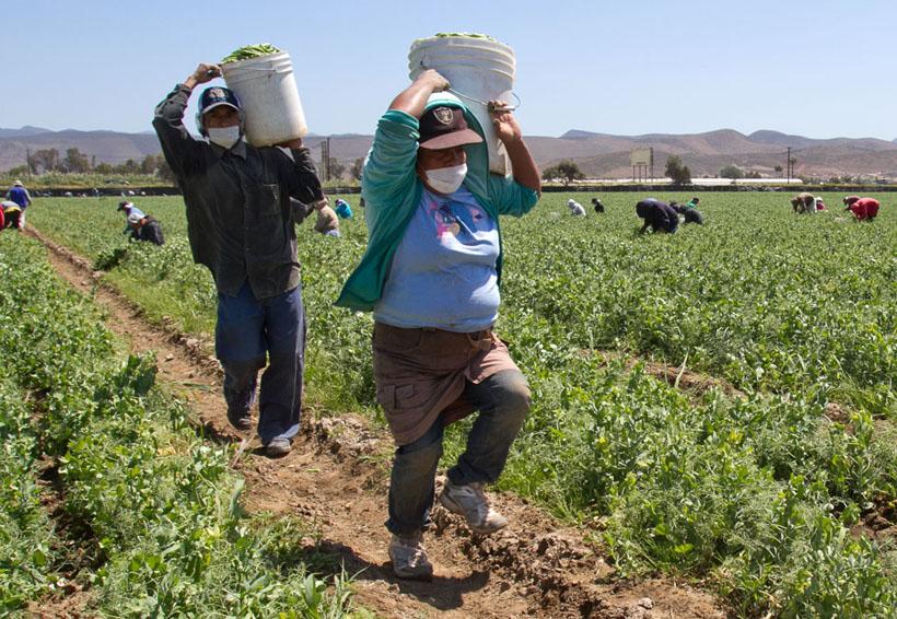 De cada 100 jornaleros en México, 7 reciben un aguinaldo y tienen vacaciones pagadas: Conapred | El Imparcial de Oaxaca