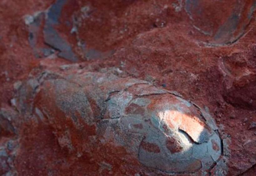 Video: Hallaron huevos de dinosaurios de más de 130 millones de años de antigüedad | El Imparcial de Oaxaca