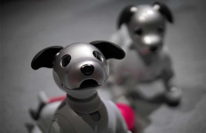 Conoce al perro-robot que esta enamorando a todos | El Imparcial de Oaxaca