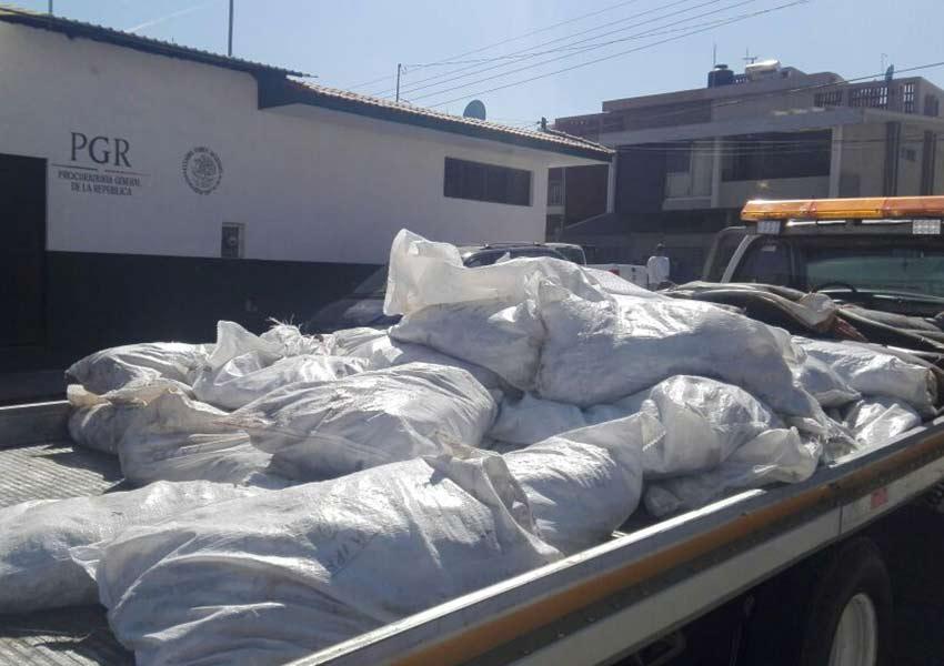 Dejan casi 300 tiburones muertos en carretera de Michoacán