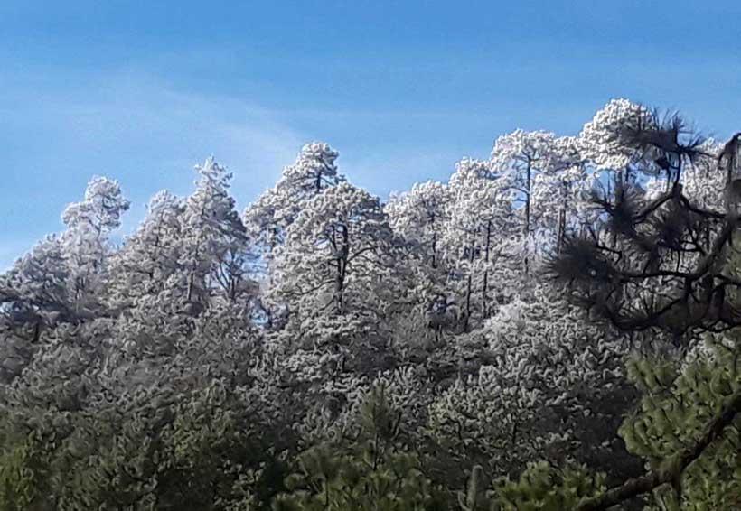 Arroyo Guacamaya aprovecha el espectáculo invernal | El Imparcial de Oaxaca