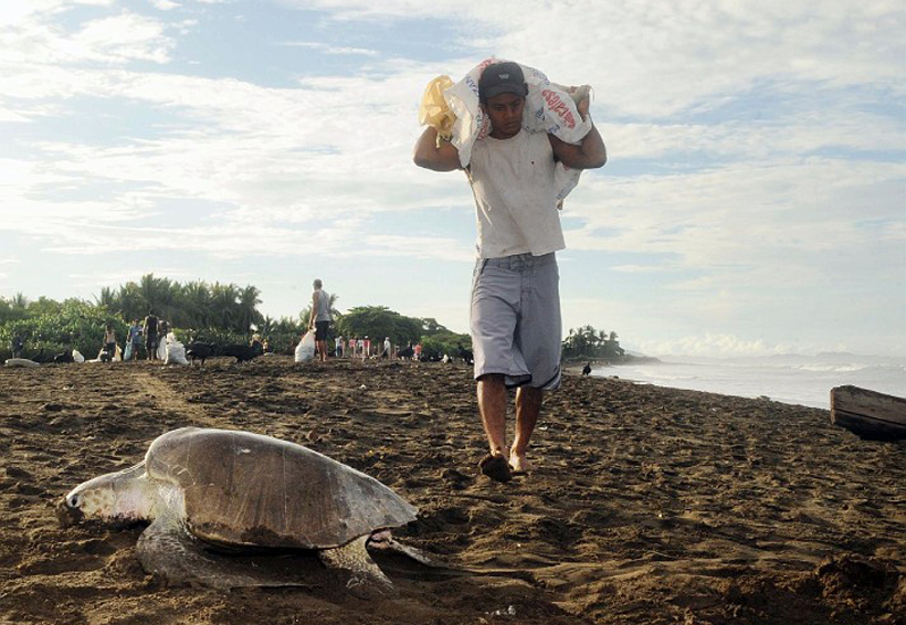 Asegura más de 20 mil  huevos tortuga en la Costa de Oaxaca