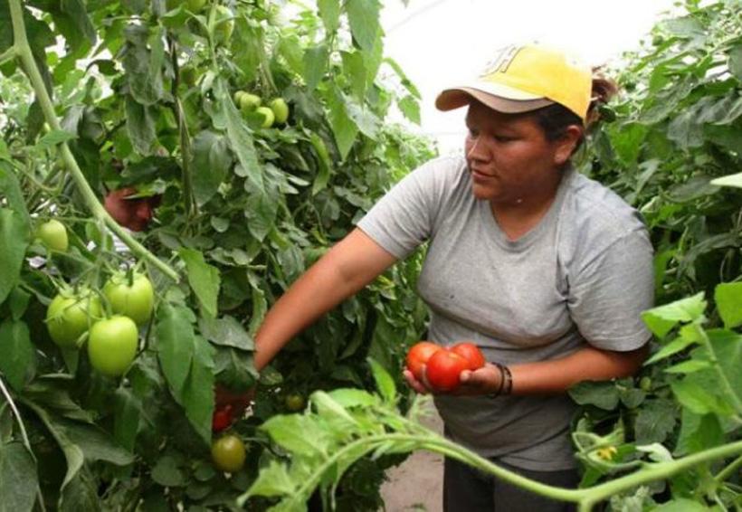 Capacitarán a mujeres de Tuxtepec que se dedican al campo | El Imparcial de Oaxaca