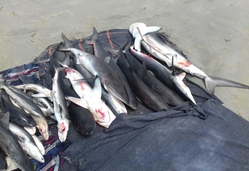 Encuentran a tiburoneros de Puerto Escondido, Oaxaca