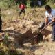 Fiscal de Veracruz detalló que en 2017 se encontraron 343 fosas clandestinas