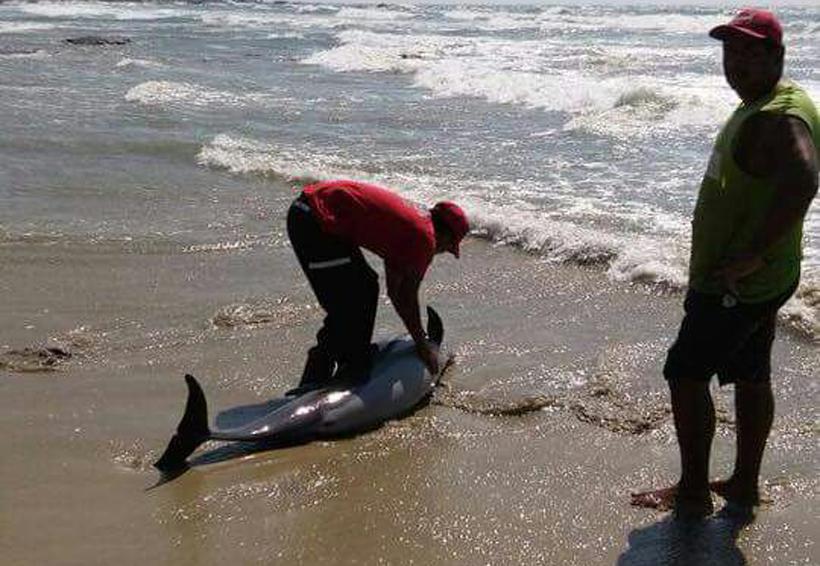 Delfín varado en la Costa de Oaxaca   El Imparcial de Oaxaca