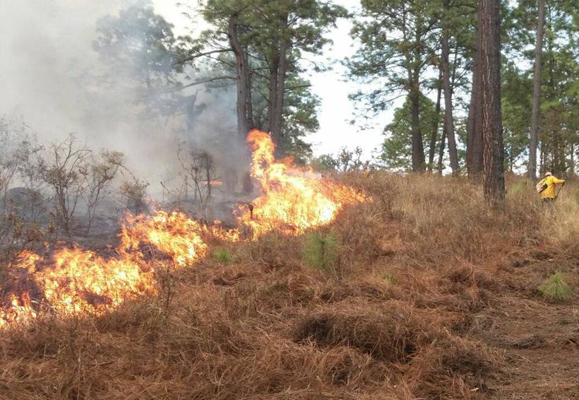 En Oaxaca, registran 3 regiones mayor número de incendios forestales | El Imparcial de Oaxaca