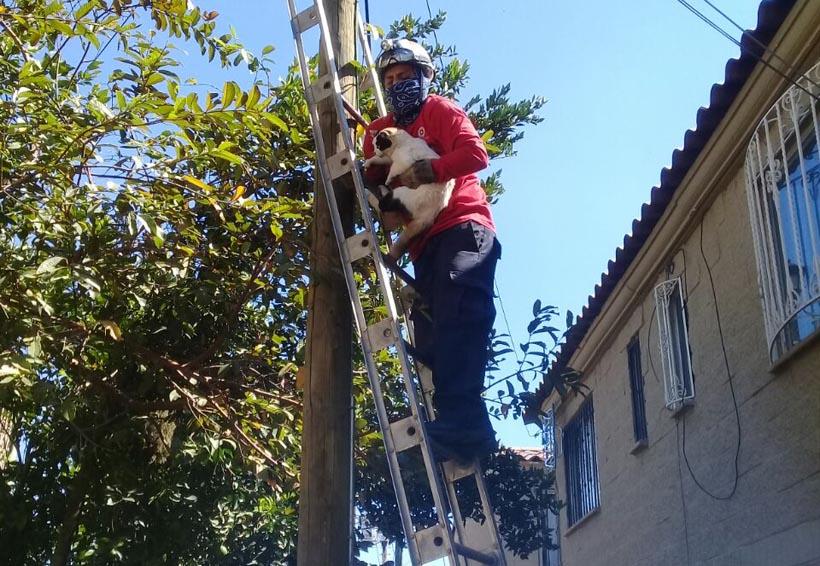Realizan rescates fuera de serie en Oaxaca en fin de semana