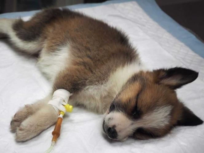 Con nanopartículas de Plata, UNAM trata moquillo en perros | El Imparcial de Oaxaca