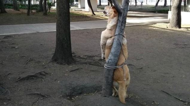 Matan y cuelgan a perro de un árbol, policía busca a responsables | El Imparcial de Oaxaca