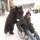 Un oso empuja la silla de ruedas de su entrenador, que sufrió un grave accidente