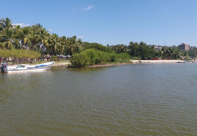Aumenta deforestación y depredación de tortugas en Puerto Escondido, Oaxaca